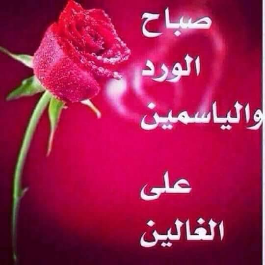 بالصور صباح حبيبي , صباح الحب ياعمرى 4756 4