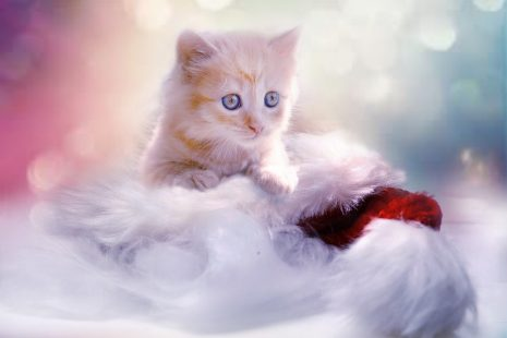 صورة رؤية القطط بالمنام , تفسير رؤيه القطط في المنام