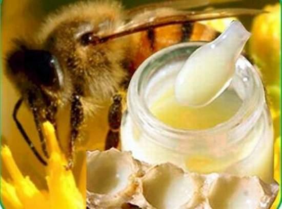 صورة فوائد غذاء ملكات النحل , الفائده الناتجه من غذاء ملكات النحل