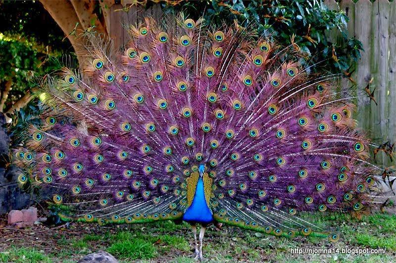 صورة اجمل طيور العالم , عالم الطيور وروعته