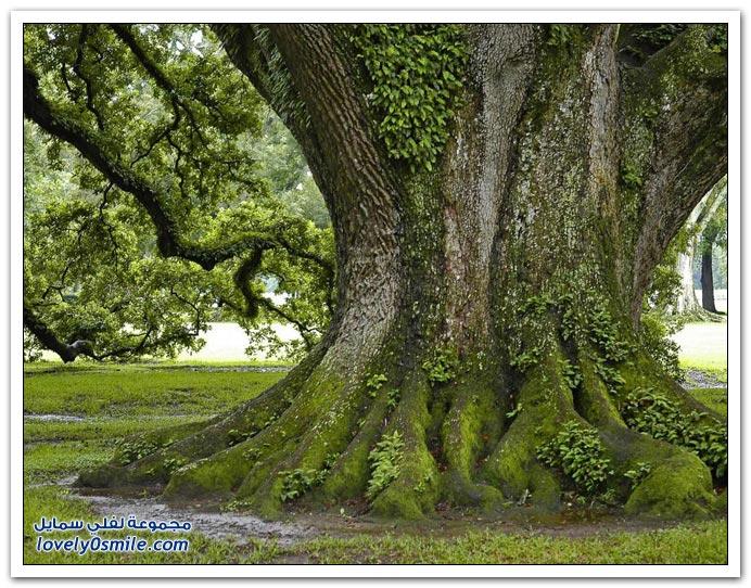 بالصور صور اشجار , بيئه الاشجار 2871 10