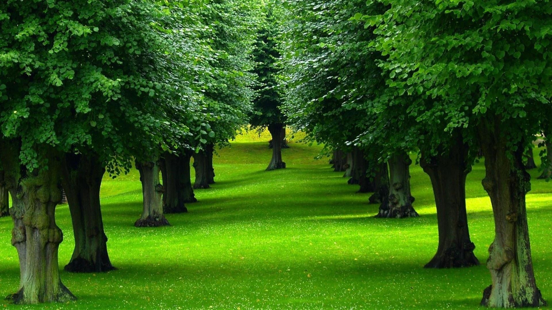 بالصور صور اشجار , بيئه الاشجار 2871 11