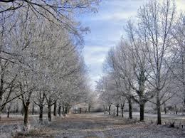 بالصور صور اشجار , بيئه الاشجار 2871 5