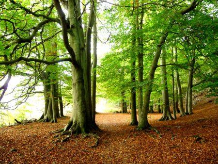 بالصور صور اشجار , بيئه الاشجار 2871 6