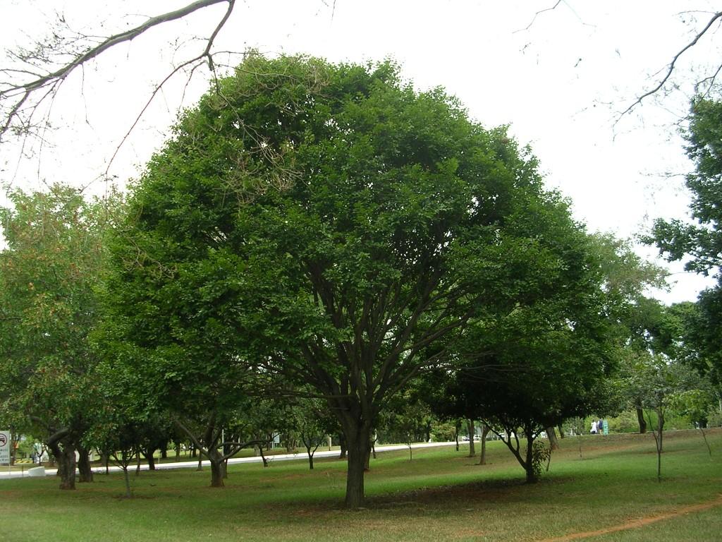 بالصور صور اشجار , بيئه الاشجار 2871 7