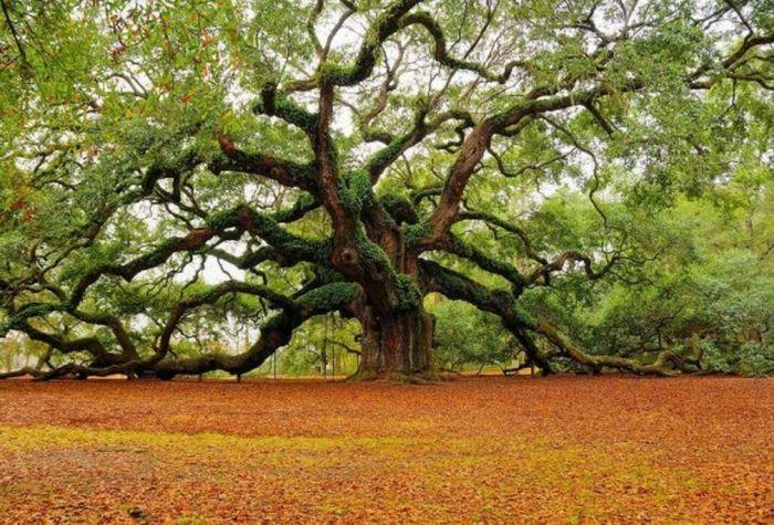 بالصور صور اشجار , بيئه الاشجار 2871 9