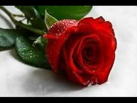 صور اجمل صور ورد , اجمل مافي الطبيعه الورد