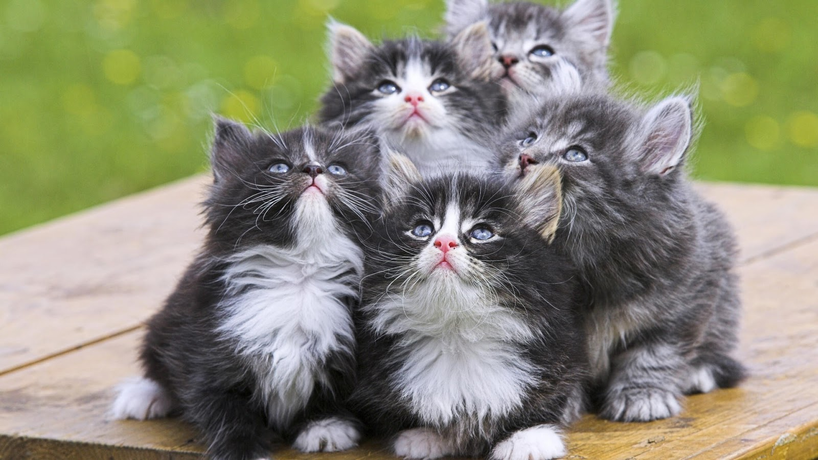 صورة اجمل الصور للقطط في العالم , اجمل القطط للتربيه