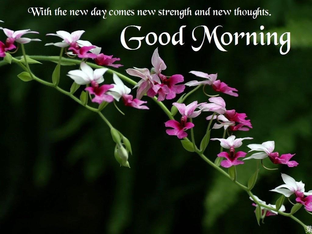 صور كلمات جميلة عن الصباح , كلام رائع عن الصباح