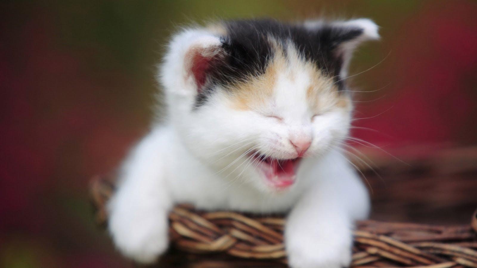 صور اجمل صور قطط , ارق واجمل صور قطط