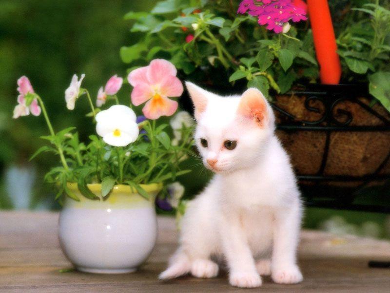 بالصور اجمل صور قطط , ارق واجمل صور قطط 5209 10