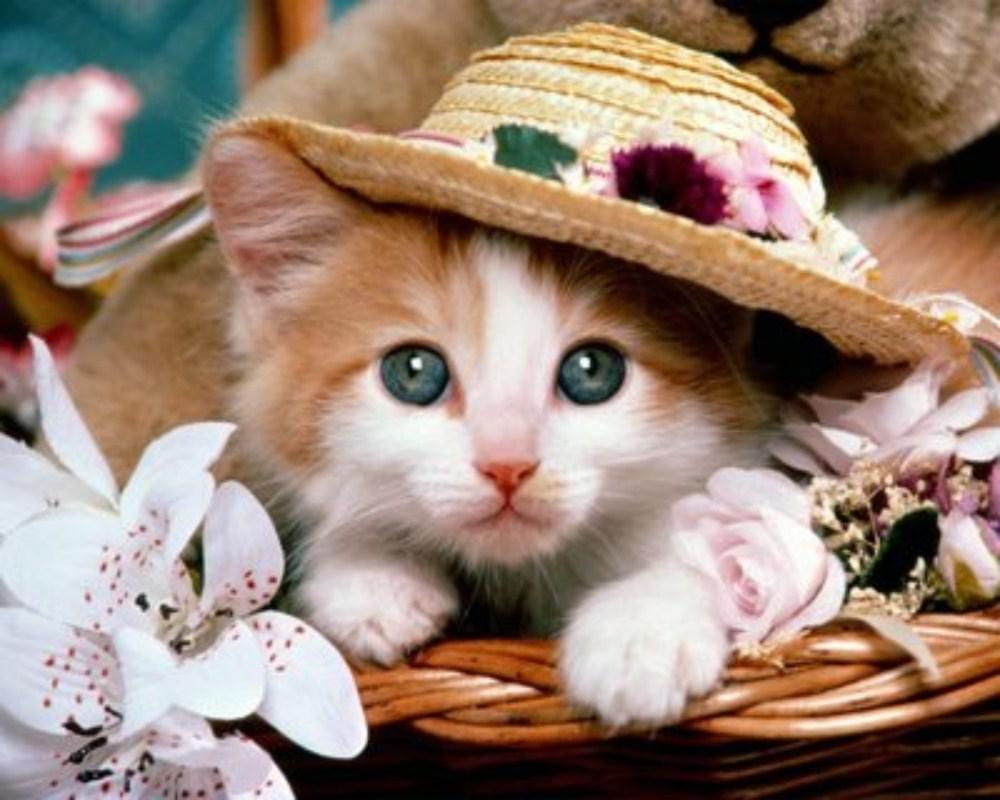بالصور اجمل صور قطط , ارق واجمل صور قطط 5209 2