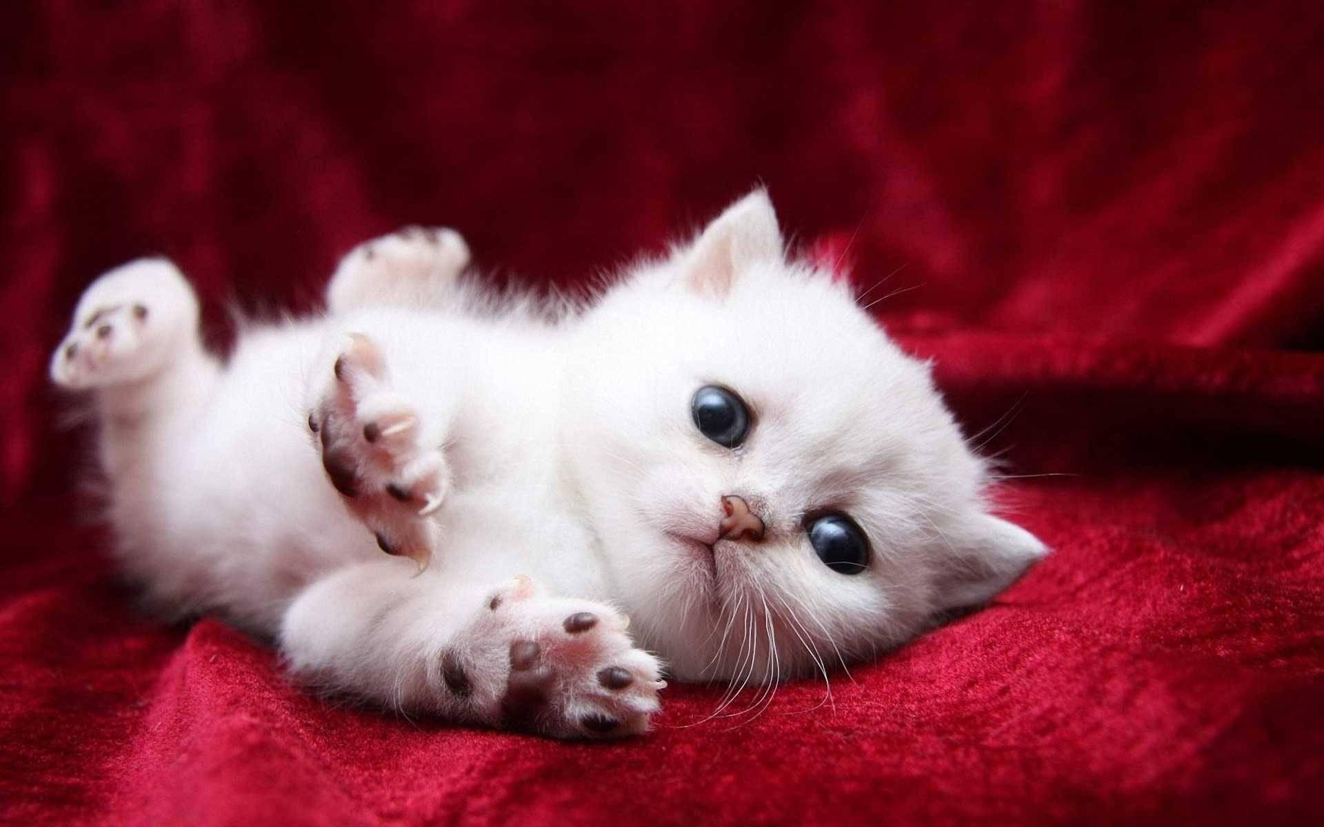 بالصور اجمل صور قطط , ارق واجمل صور قطط 5209 3
