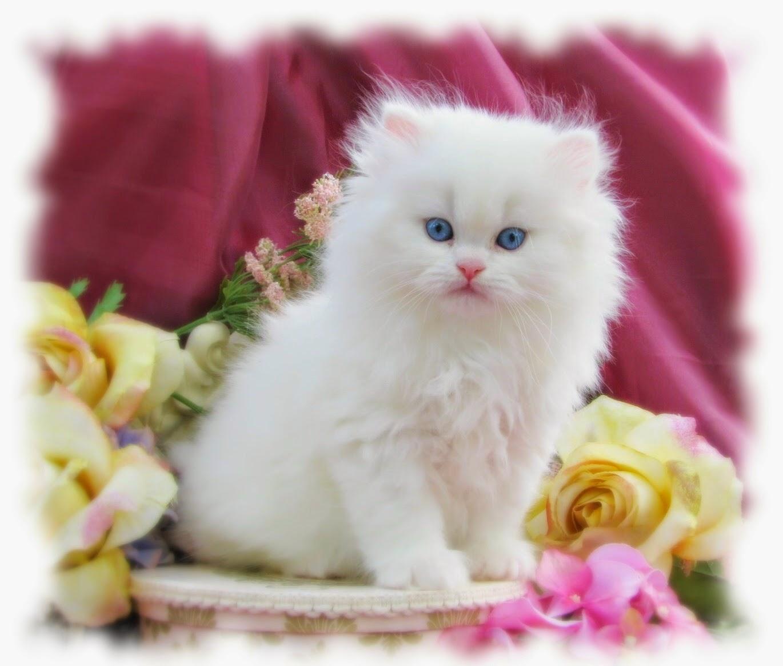 بالصور اجمل صور قطط , ارق واجمل صور قطط 5209 4