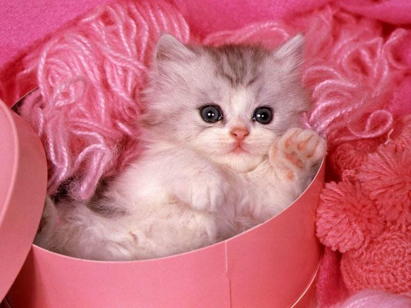 بالصور اجمل صور قطط , ارق واجمل صور قطط 5209 6