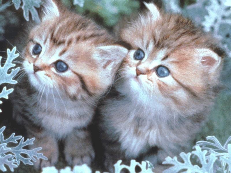 بالصور اجمل صور قطط , ارق واجمل صور قطط 5209 7