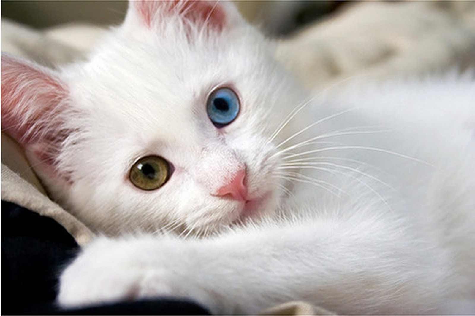 بالصور اجمل صور قطط , ارق واجمل صور قطط 5209 8