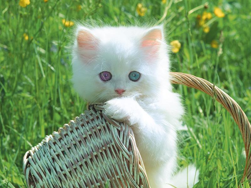 بالصور اجمل صور قطط , ارق واجمل صور قطط 5209