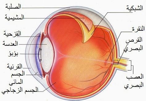 صورة مكونات العين , تشريح العيون البشرية