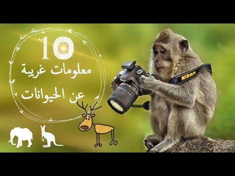 صورة معلومات عن الحيوانات , اغرب المعلومات عن الحيوانات