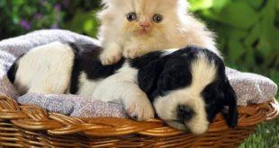 صور معلومات عن الحيوانات , اغرب المعلومات عن الحيوانات