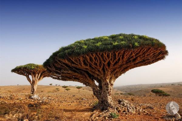 صورة اجمل الصور الطبيعية في العالم , اجمل المزارات الطبيعية 1301 7
