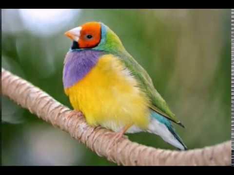 صورة صور عصافير , اجمل صور للعصافير