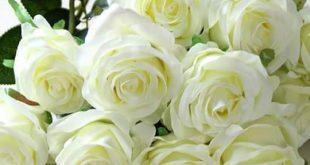 صورة صور ورود طبيعيه , اجمل واروع الورود الطبيعيه