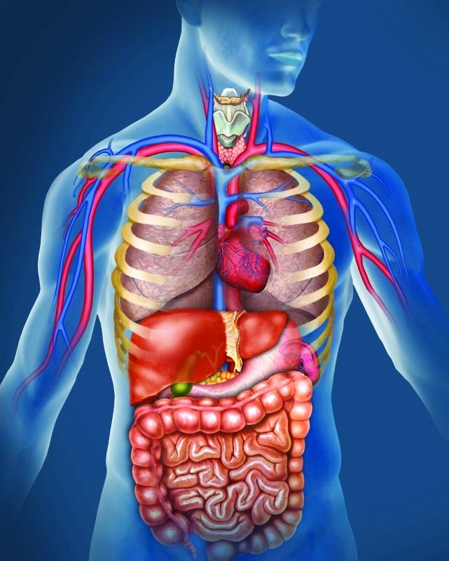 صورة صور جسم الانسان , اروع الصور بالتفاصيل عن جسم الانسان
