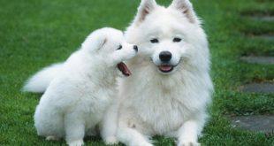 صور اجمل حيوان في العالم , صور لاجمل حيوان في العالم وهو الكلب