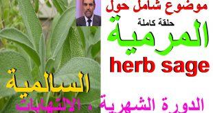 صورة عشبة الميرمية , فوائد الميراميه الصحيه والعلاجيه