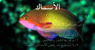 معلومات عن الاسماك , انواع اسماك الزينه