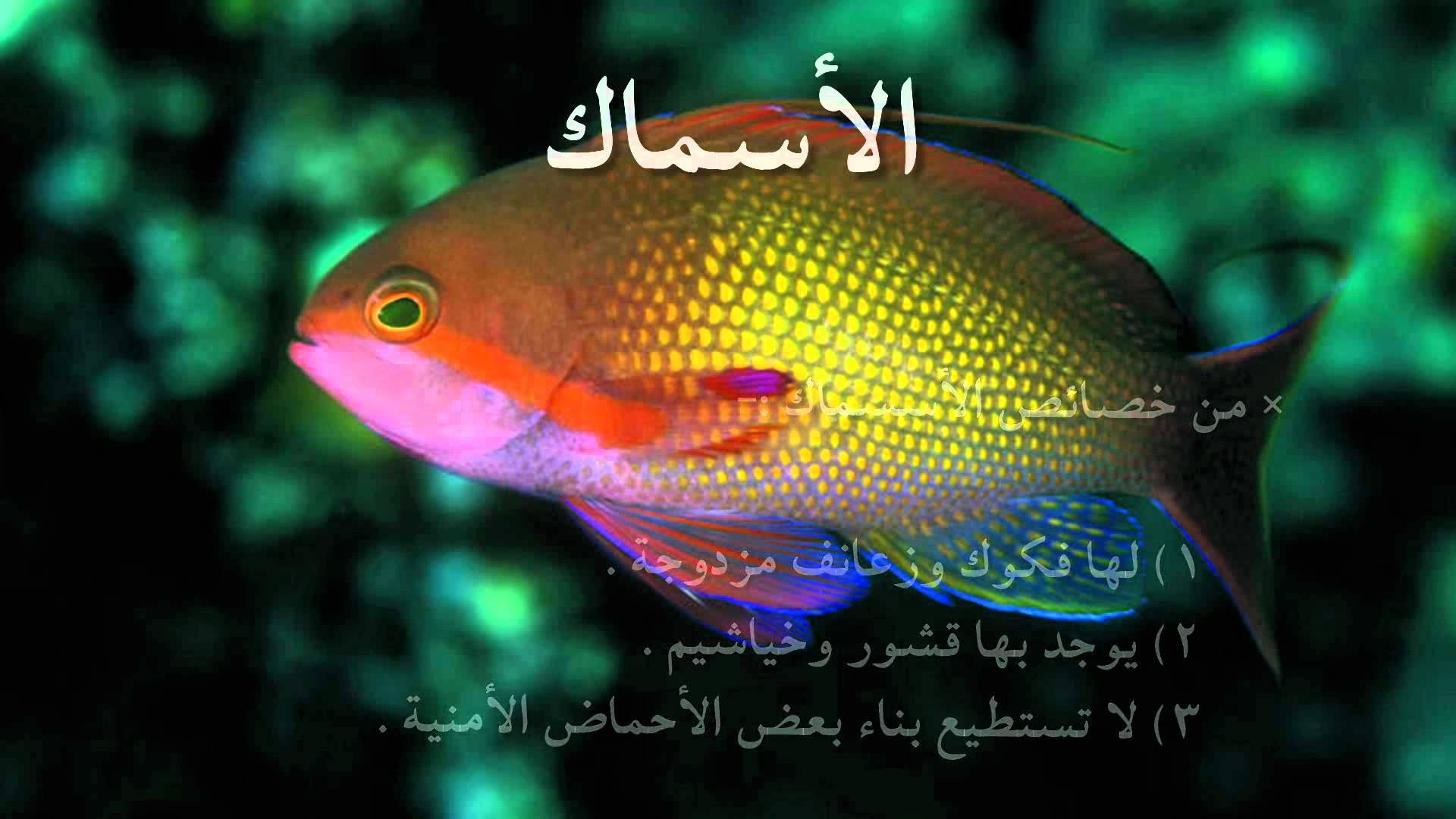 بالصور معلومات عن الاسماك , انواع اسماك الزينه 3358