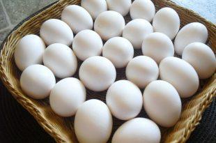 صورة تفسير رؤية البيض في المنام للمتزوجة , البيض فى المنام يعنى الكثير للمتزوجة