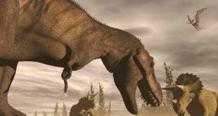 بالصور معلومات عن الديناصورات , معلومة مفيدة عن الديناصور 5874 2 310x165