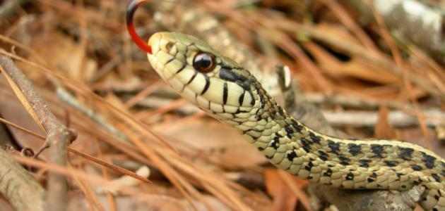 صور الثعابين في المنام , دلائل الحسد والحقد في المنام