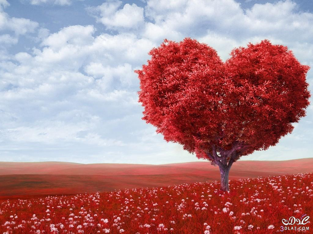بالصور صور قلب حب , اجمل صور قلوب 3317 7