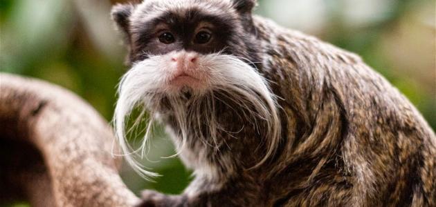 بالصور اغرب الحيوانات , شاهد اغرب الحيوانات في العالم 3440 2