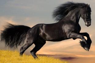 صورة حصان عربي , اجمل صور للحصان العربي