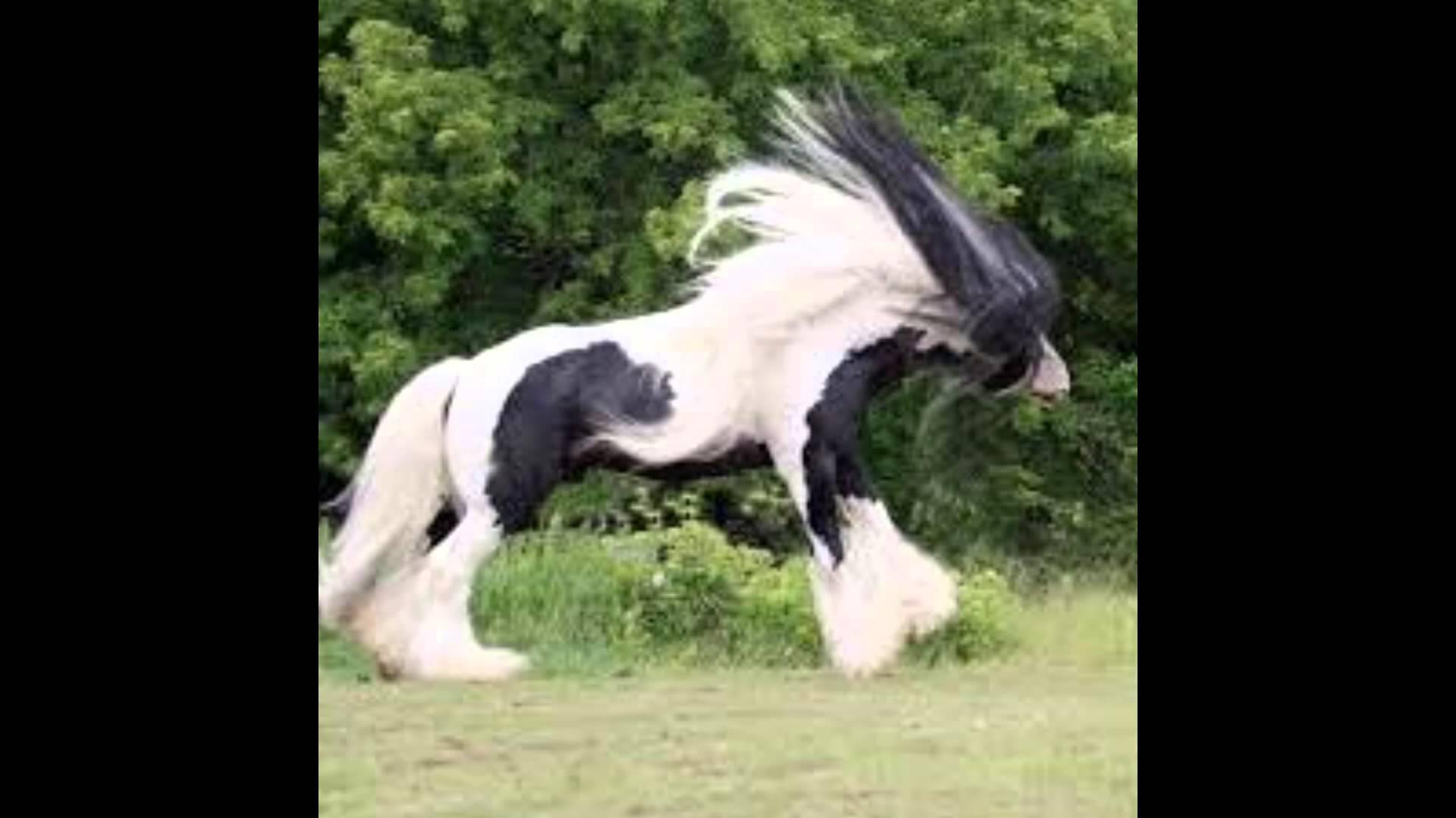 بالصور حصان عربي , اجمل صور للحصان العربي 3505 1