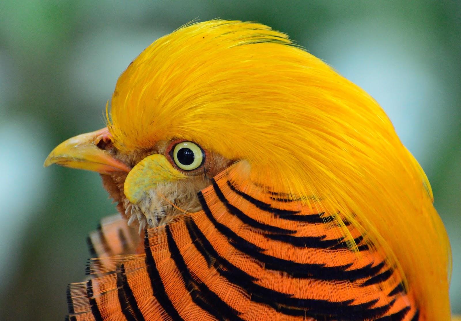 بالصور اجمل الطيور في العالم , اغرب الطيور الموجوده فالعالم 3614 7