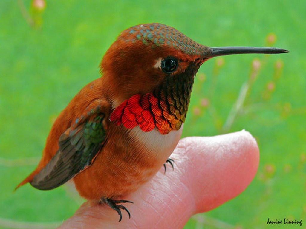 بالصور اجمل الطيور في العالم , اغرب الطيور الموجوده فالعالم 3614 8