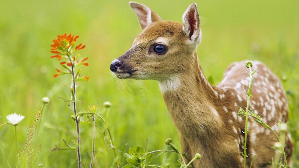صور صور حيوانات اليفه , رمزيات لبعض الحيوانات الاليفه