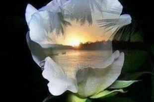 صور مساء جميل , كلمات رائعه جدا تقال عند حلول المساء