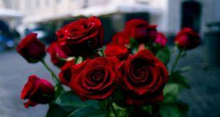 بالصور صور ورد خلفيات , اشكال متنوعه جدا للزهور والورود 4094 13 310x165