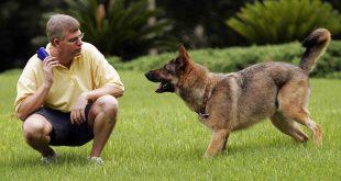صوره كيفية تدريب الكلاب , تدريب الكلاب الصغيرة