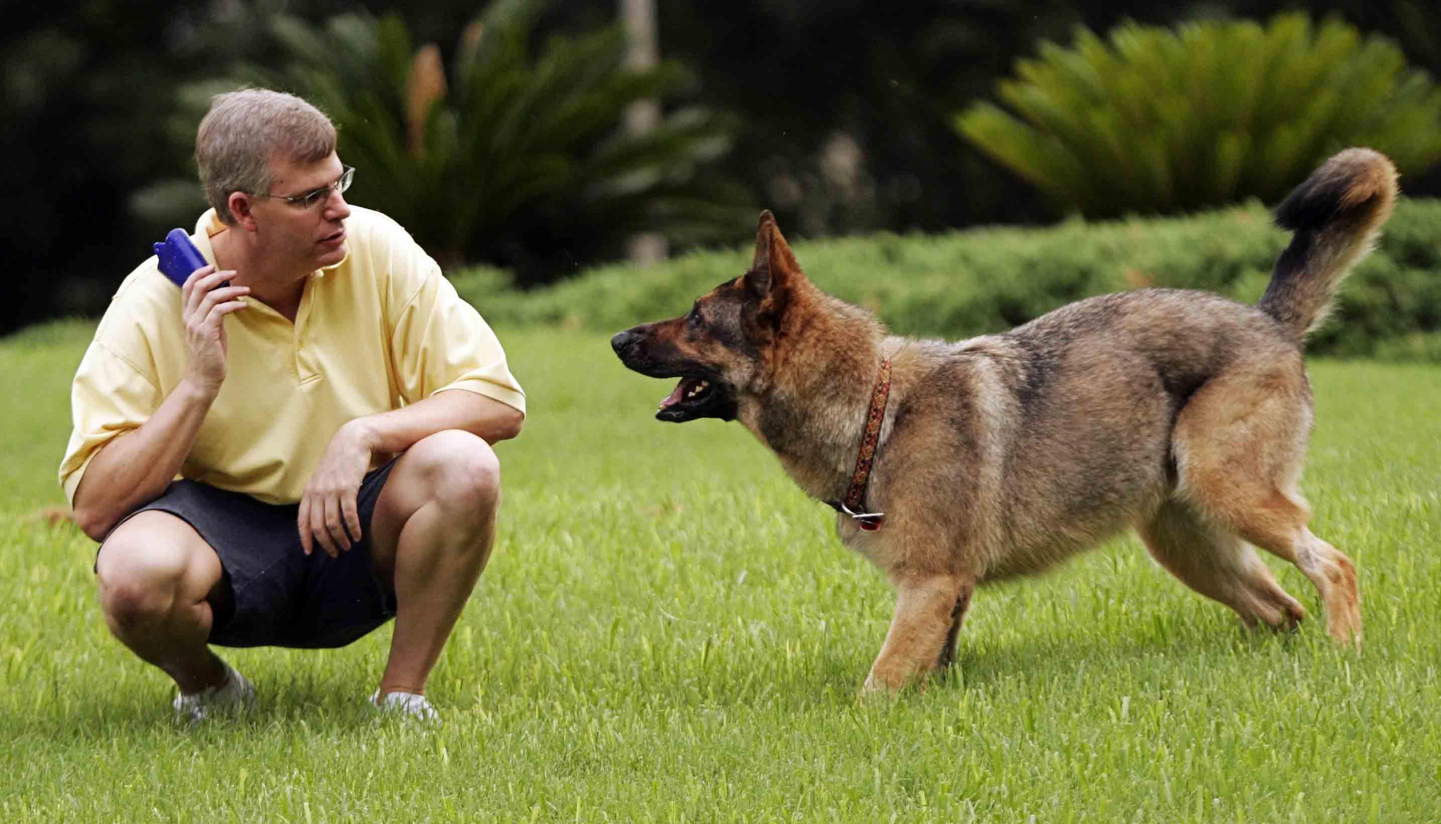صور كيفية تدريب الكلاب , تدريب الكلاب الصغيرة