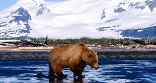 بالصور مناظر طبيعية من العالم , مناظر طبيعيه للحيوانات 6201 10 310x165