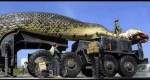 صوره اكبر افعى في العالم , ما هى صفات اكبر ثعبان فى العالم
