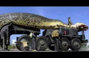 بالصور اكبر افعى في العالم , ما هى صفات اكبر ثعبان فى العالم 64 2 310x205